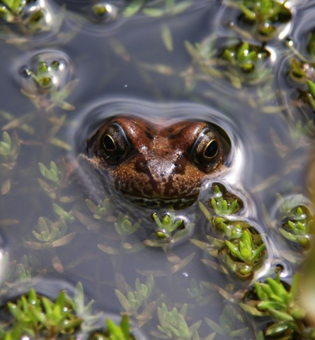 Bines frog min slideshow r.JPG