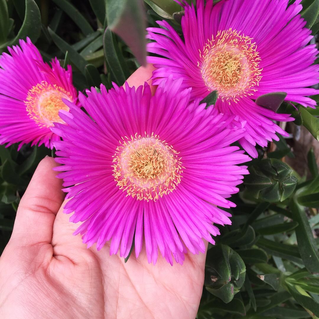 Joogamatkat_Flowerpower.JPG