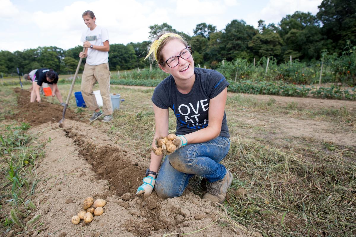 Harvesting potatoes at Eden Hall Campus