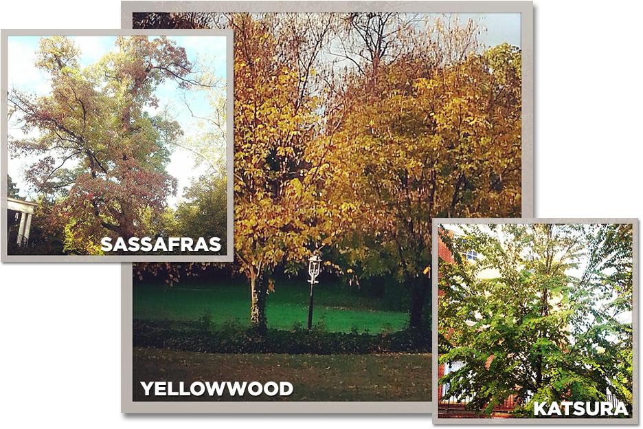 collage-treecampus.jpg
