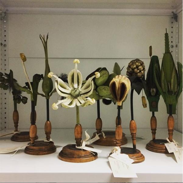 Fleet of German didactic botanic models, papier-mâche, Robert Brendel, 1875-1900. Blythe House, storage for London's Science Museum.