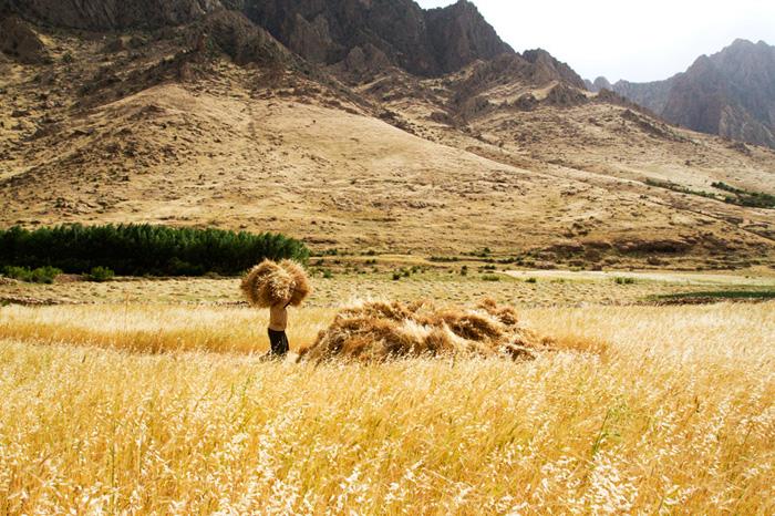 A woman carries bushels of wheat, unfortunately inedible.