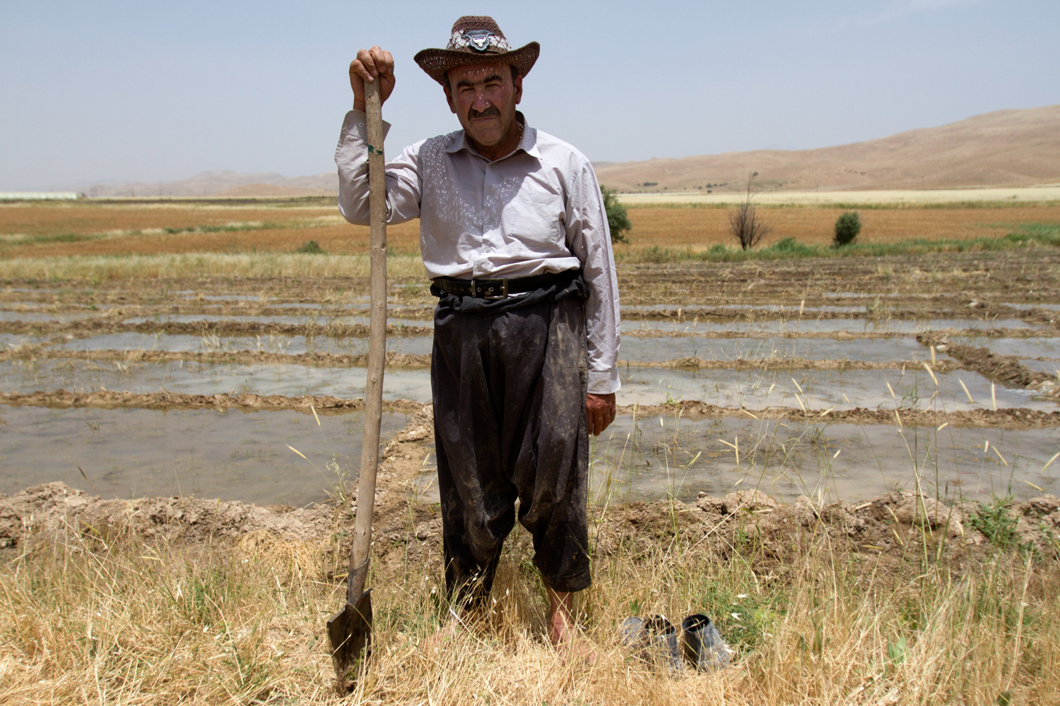 A rice farmer tends paddies in Baziyan to recultivate an heirloom variety of rice called Qush Qaya. The effort is initiated by the First Lady of Iraq, Hero Ibrahim Ahmed Talabani, who remembers the round, nutty rice as one of the many native plants that have disappeared since her childhood. Baziyan was once a prolific rice region; now the land is dry and varieties are extinct.