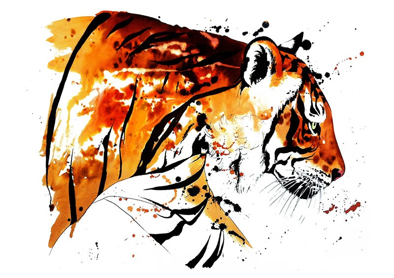 Bengal+Tiger.jpg