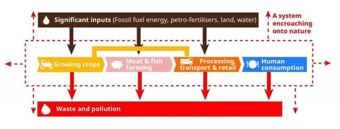 Linear food system model ( diagram from Feedback Global  https://feedbackglobal.org/  )