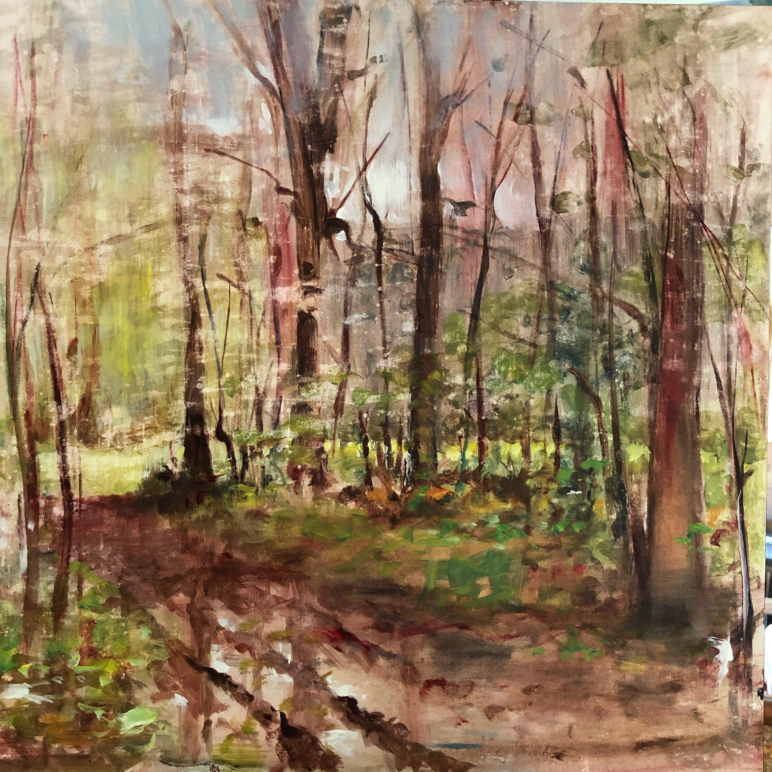 woods after rain