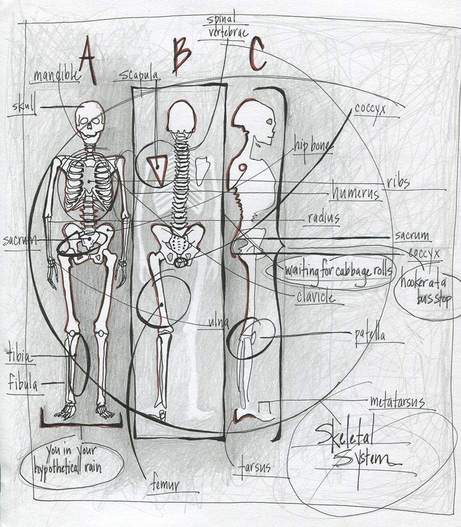 anatomy_02.jpg