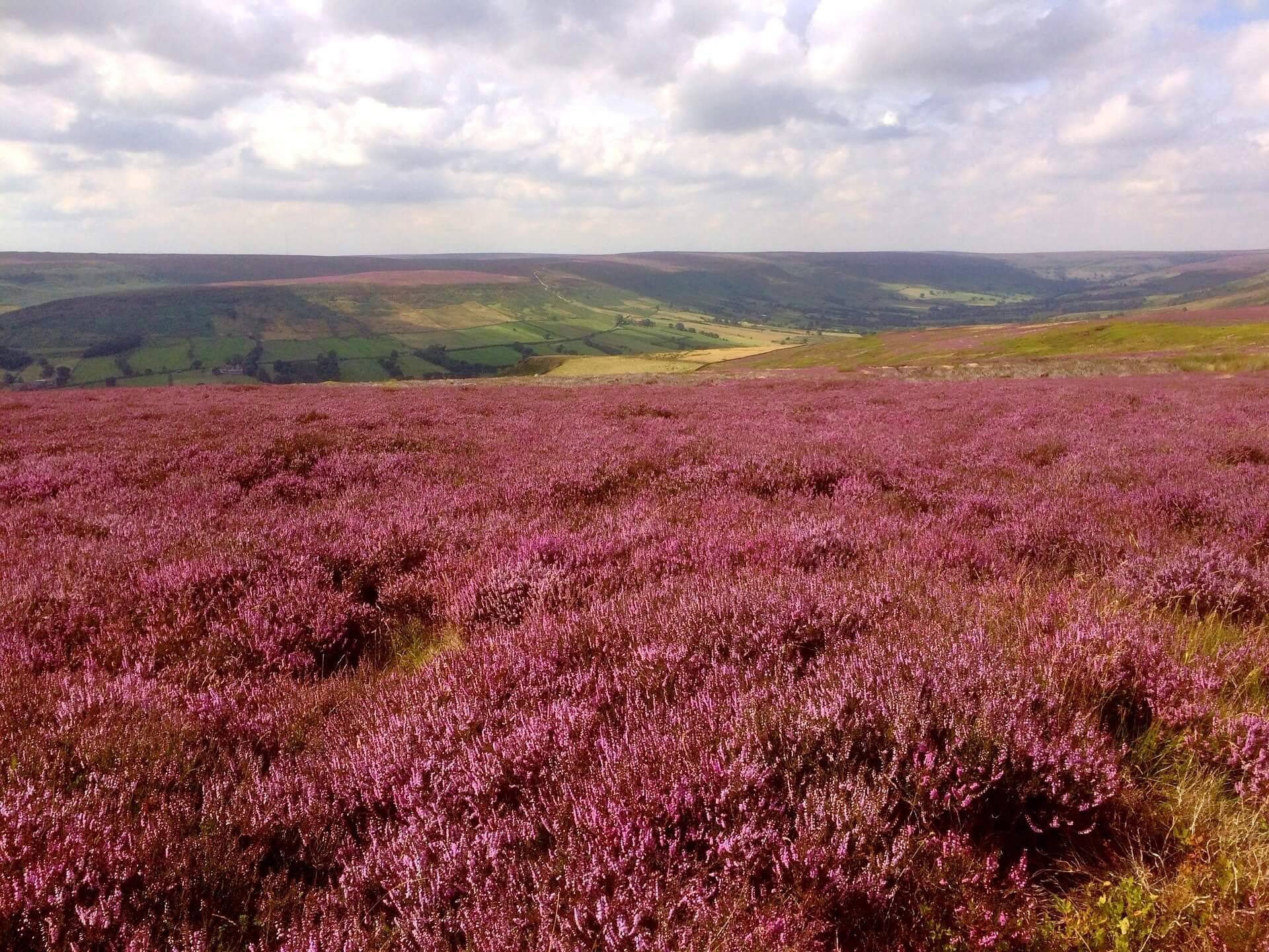 Heather moors