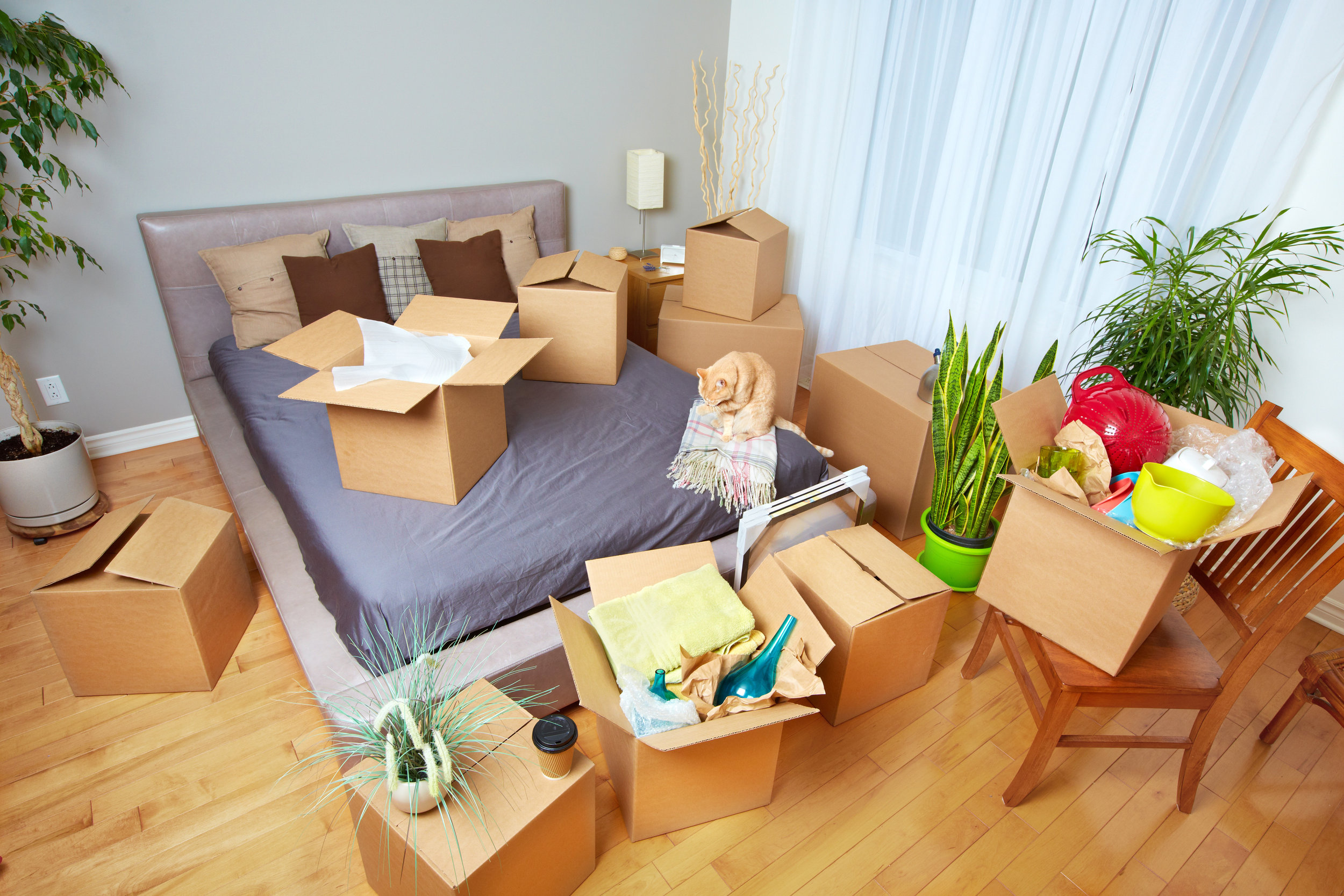 HOME MOVER - Secure your dream move and get that house you've made an offer on. Knowing we're there with you at every step.