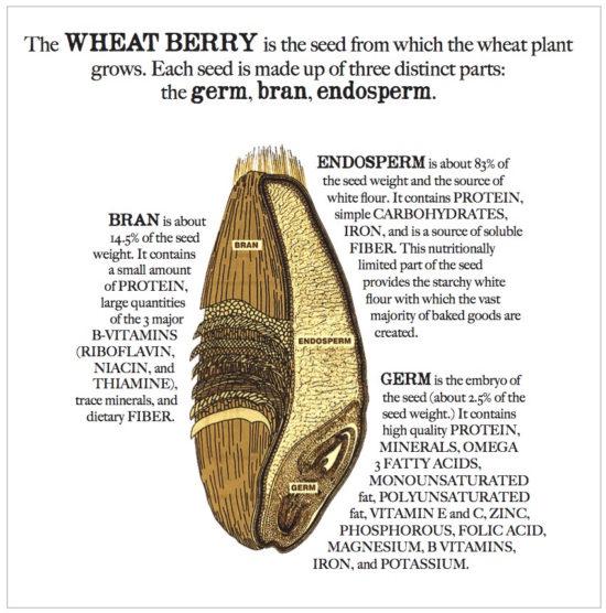 wheat-berry-550x556.jpg