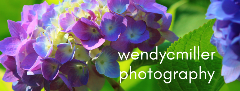 wendycmiller photography.png