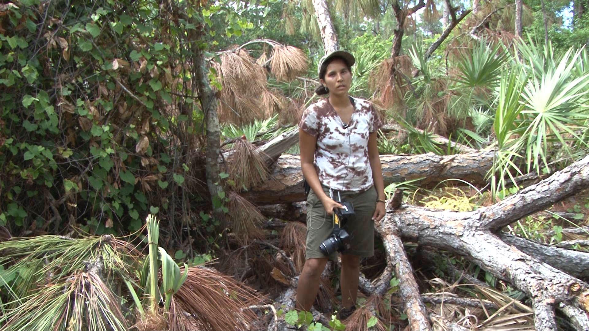 Ruddy at cut down tree.jpg