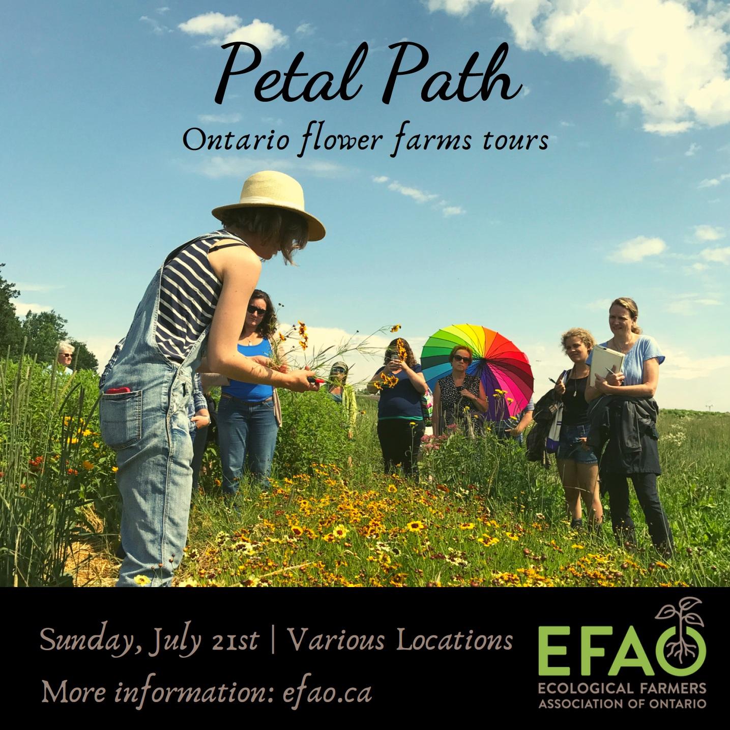 Petal Path fb.png