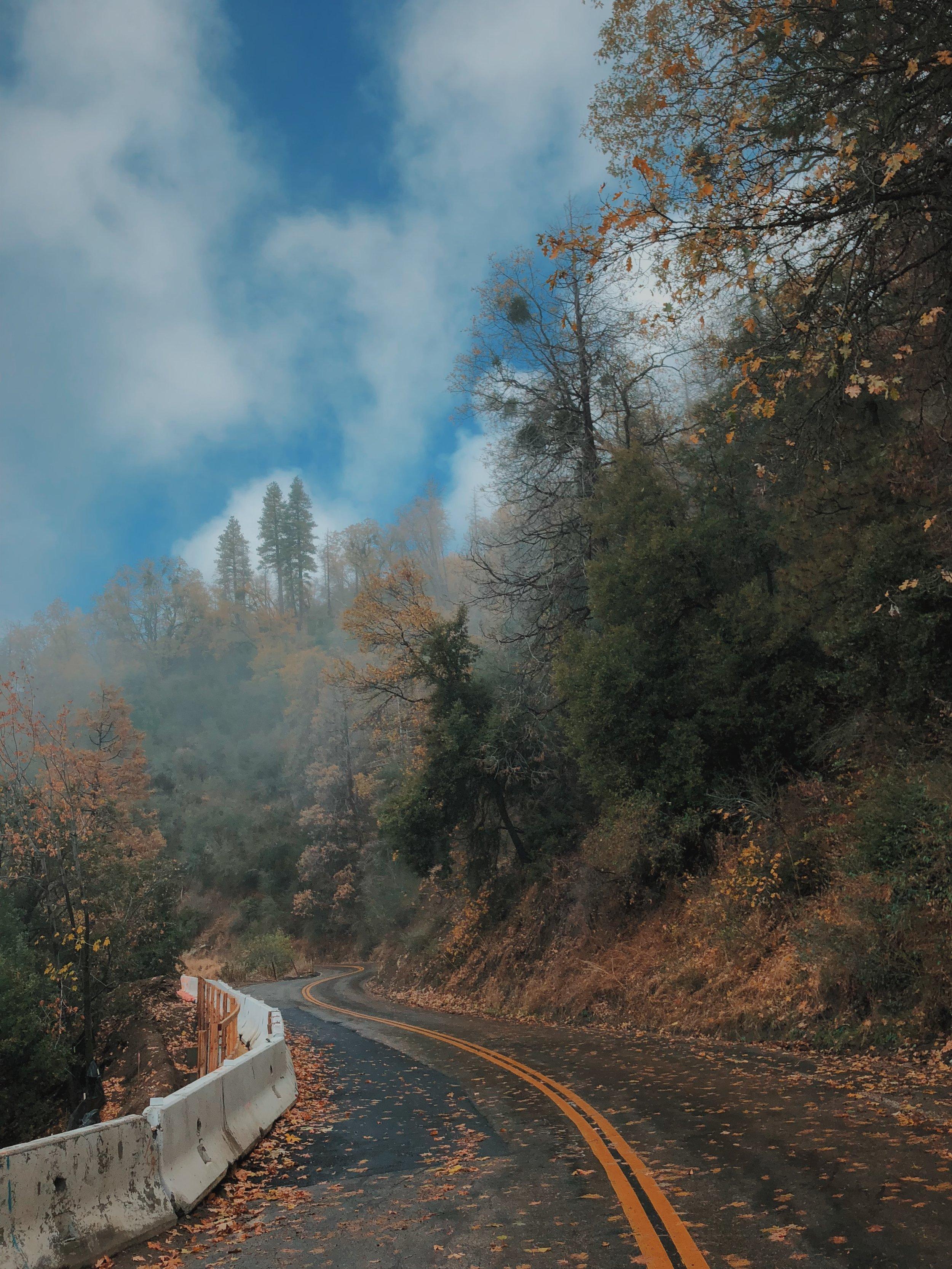 Misty Road.JPG