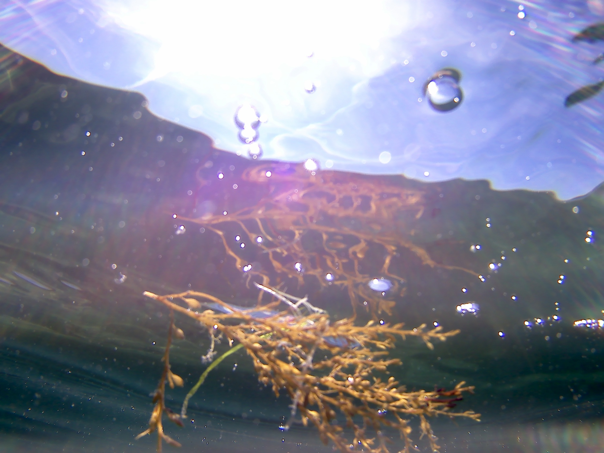seaweed and bubbles.jpg