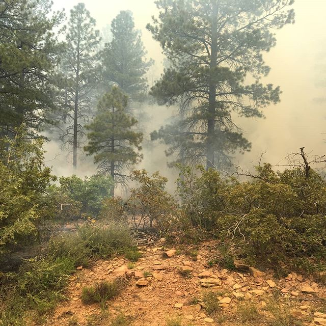 For more information on prescribed burns and a firsthand account of the Boggy Draw tour, check out our website and sign up for our E-newsletter.