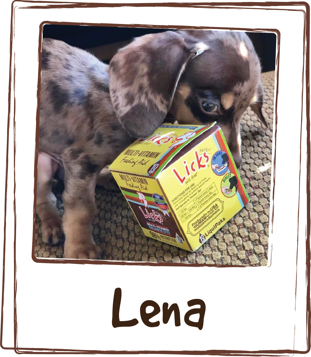 """""""Lenna is a special needs dog. She is deaf, blind and has hydrocephalus. Using Licks feeding aide has helped her to gain weight and keep her fighting! She's a picky eater, as soon as she smells the package open she comes running to gobble up her food. Thank you Licks!"""""""