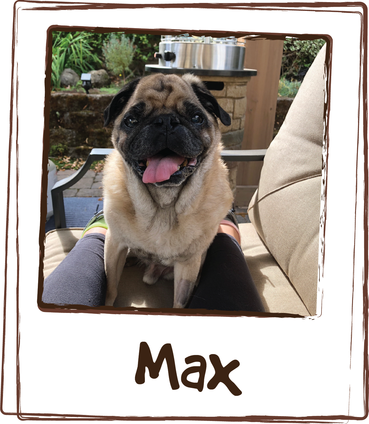 """""""Hi again! So when Mr. Max was younger I found out that he was allergic to over the counter food. I started making his food (brown rice and chicken) and after much searching found your Multi Viamin Feeding Aid. I wrote you and told you how please I was and you actually are using my Testimonial on the box! Well, Max is quite a bit older and recently it appeared that he was starting to wind down. I was heart broken watching him move with difficulty as well as learning that his heart was skipping beats and feared we may not have him for much longer. I started using the Joint + heart formula and within two weeks even my dog walker was telling me what did I do! Max is like a puppy again! Loving life and running around playing with his 11 month old Italian Mastiff Sister, who by the way also gets the Multi viamin feeding aid. I havent had his heart retested but I am sure it is helping with that as well. Once again, Thank you so much for providing these formulas.!! I have my little guy back happy and healthy!!"""""""