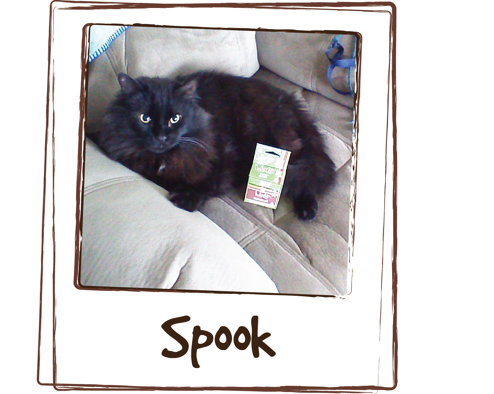 """""""Giving Spook Licks Zen has calmed him down so he isn't aggressive towards our 8 year old female cat. It mellows him right out so he doesn't have the urge to jump at her when she walks by."""""""