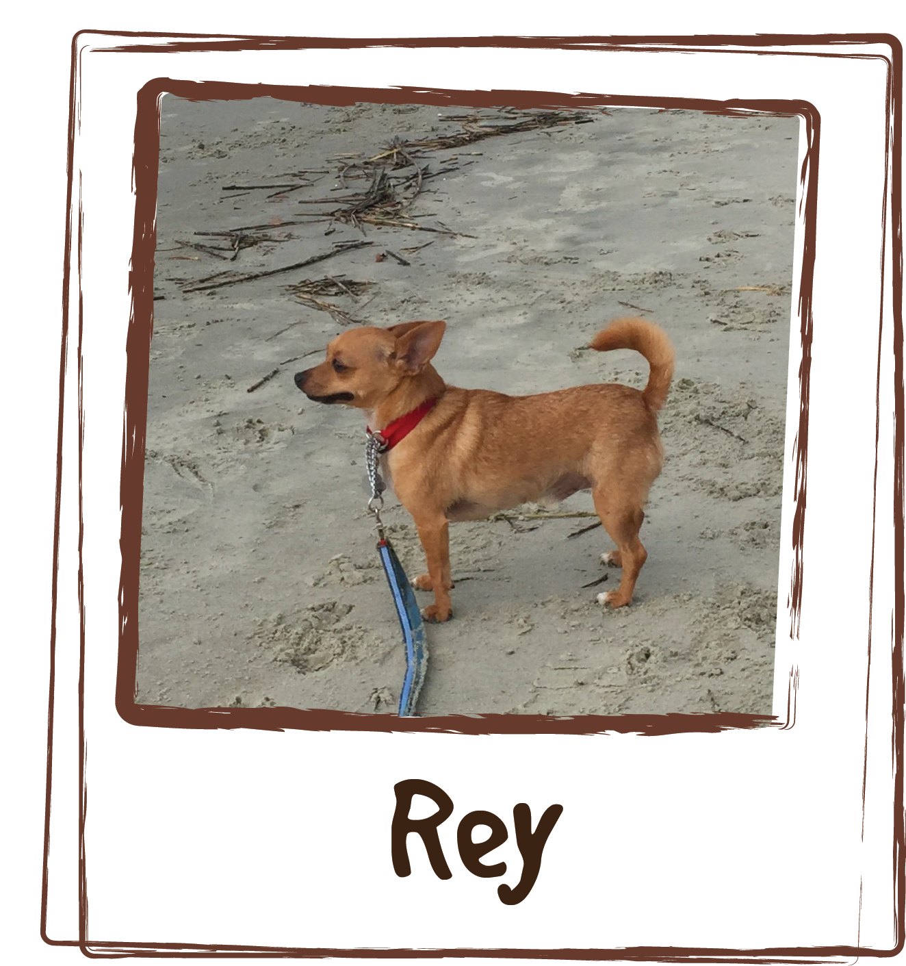 """""""Our little guy Rey, was really suffering with skin allergies and itching during the hot and humid summers here in South Carolina. We tried everything from over-the-counter allergy medication to prescription formulas. Nothing helped! Rey would chew and scratch, and pull out patches of fur. Then, while shopping at a local pet store I discovered Licks Dog Skin and Allergy + Shiny Coat and decided to give it a try. First, Rey loved the flavor and it made a nice supplement on his food. Then, the itching subsided and his coat filled in more beautiful than before! He is a happy boy now, and loves his Licks!! Thank you for making such a healthy solution for a frustrating problem!!"""""""
