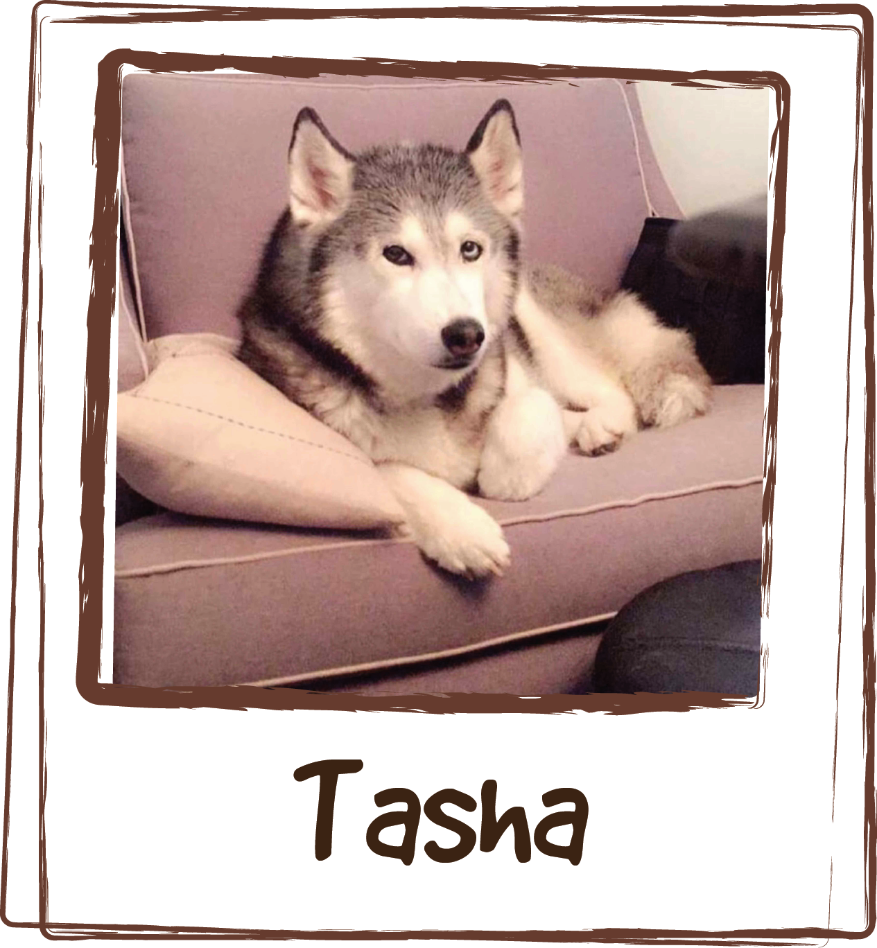 """""""This is miss Tasha. She does not care for thunderstorms or fireworks AT ALL. She has been known to keep us up all hours of the night, panting, pawing, clawing, jumping on top of the bed and trying to hide from the scary sounds by curling up next to us and being held tightly. Then, I discovered LICKS Pill-Free Zen packs. One sniff and she comes running! When we know it's going to storm or if there's a holiday with fireworks, we give baby girl a Zen pack and within 20-30 min, she is calm, not doped up like she would be with an anti anxiety medicine that would normally be prescribed. She is just zen and she hardly notices the scary noises. I love that this product is natural. It's important to me to give the best quality ingredients to our family, human and fur. We always have a stock of Zen packs on hand. Thank you for making such a wonderful solution for my girl's storm anxiety. Now Tasha, husky brother Bru, and Mom & dad can sleep peacefully. 😆💖"""""""