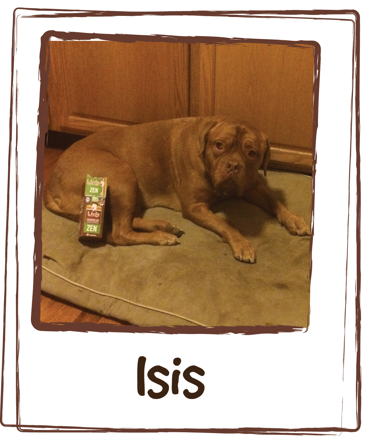 """""""My name is Isis and the world is very scary for me. I've gotten better about a lot of stuff but storms are still terrifying. Tonight there isn't a storm, Dad is burning dinner and the smoke detectors are clearly trying to kill me. Zen to the rescue. I know when my Mom gives me Zen, I feel better. Let the calm kick in and I'll get my Zen on."""""""