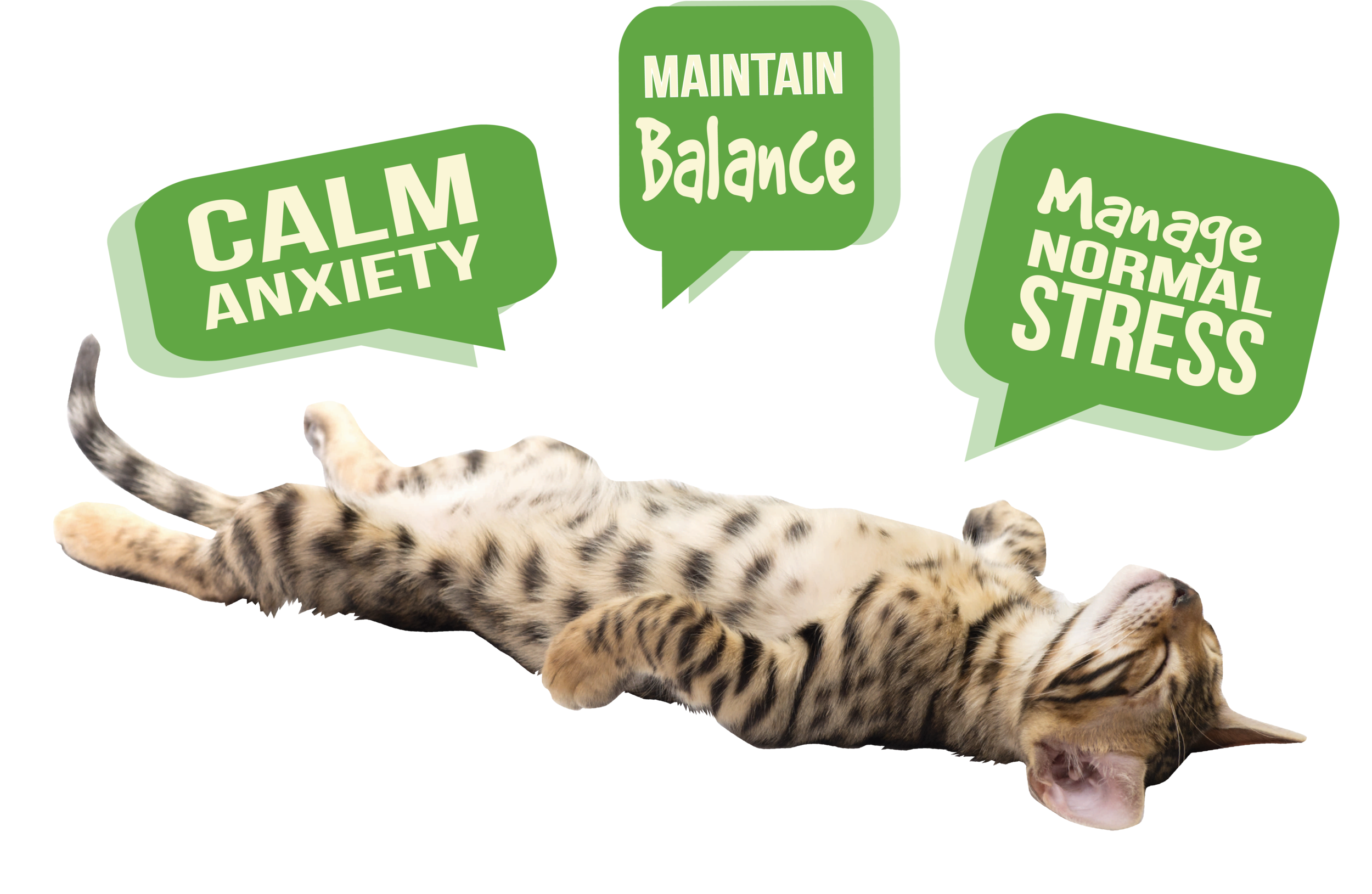cat Zen graphic.png