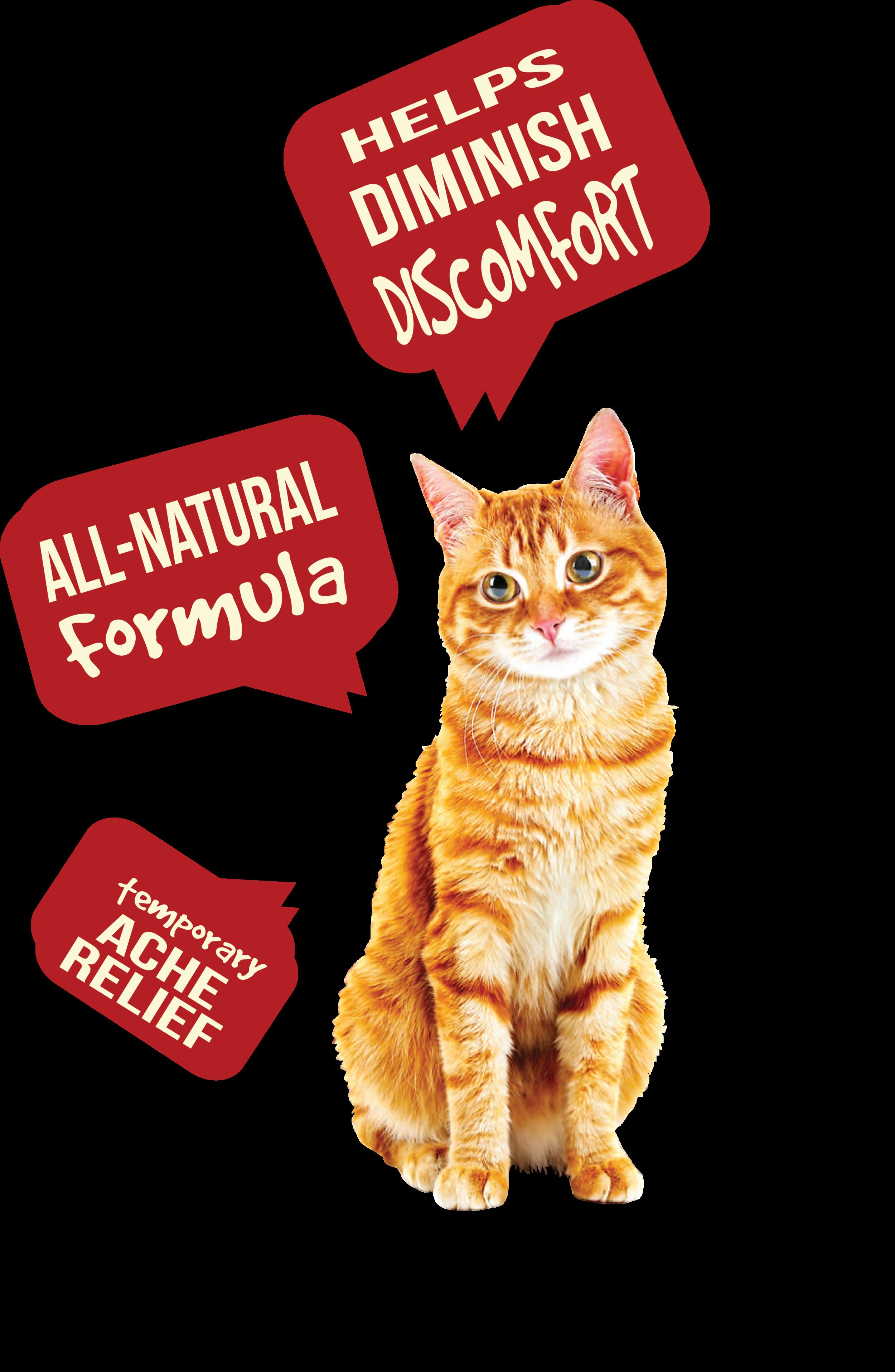 cat ache aid r1.png