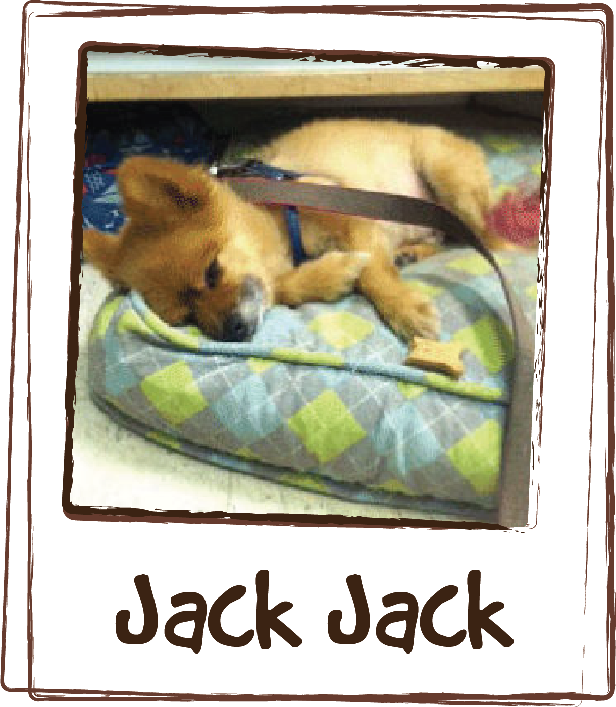 """""""Last night with the storms the Thundershirt didn't even TOUCH Jack-Jack's anxiety. Neither he nor I slept as he just sat next to me shaking and panting. When the storms hit again this morning, I came in, grabbed a packet of ZEN™ and he lapped it up. Within 10 minutes, he was calmly laying on his bed! He is now asleep, sans thundershirt, behind the counter. Amazing!! Thanks!"""""""