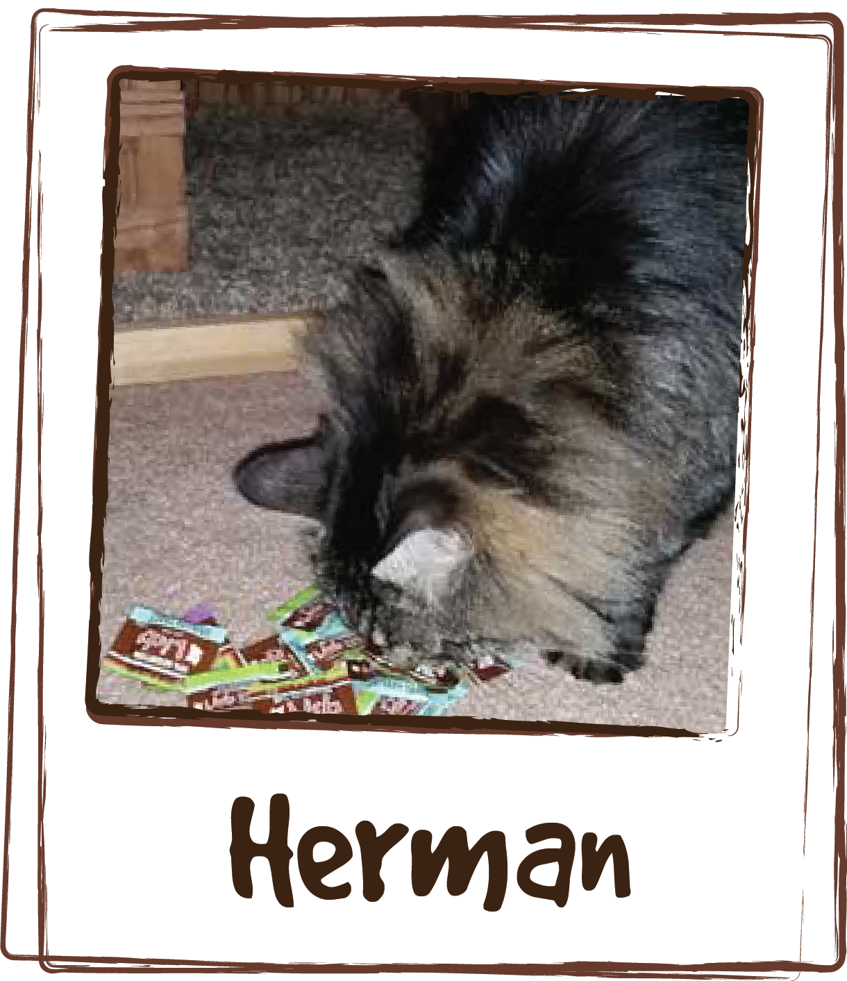 """""""My senior male cat, Herman, was suffering from constant urinary tract problems. Not only did LICKS® help with the one he had when we first started him on LICKS®, he has not had one since! The Vet had him on an almost constant regimen of antibiotics, which were wearing on his immune system and nearly impossible to get him to swallow. She also suggested changing his diet to a food with UT fighting ingredients – with my fickle cat this was never going to happen – since he will only eat one type of food. I am so happy to have found this product and not have had to change his regular diet in the process!"""""""
