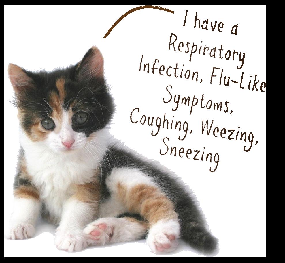 cat immunity.png