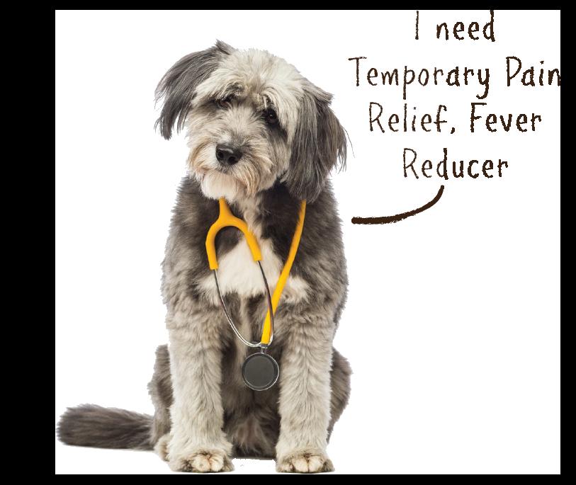 dog ache aid2.png