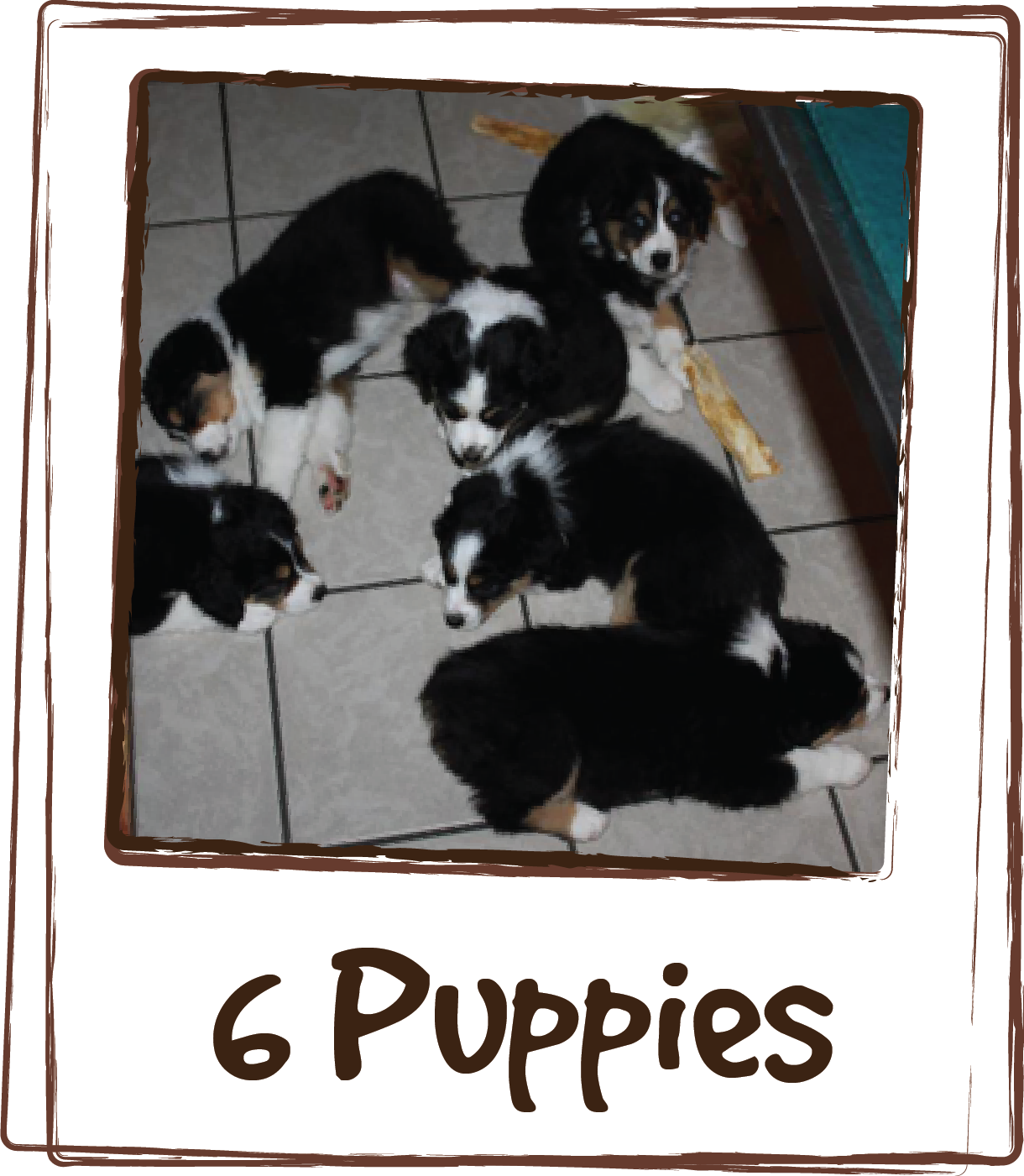 """""""Experiment successful! 6 puppies, 7.5 weeks old. LICKS® ZEN™ given 15 minutes prior to car ride. They were total angels at the eye doctor. Hardly any whining in the car, slept through their time at the clinic and slept on the way home. Yay for LICKS®!"""""""