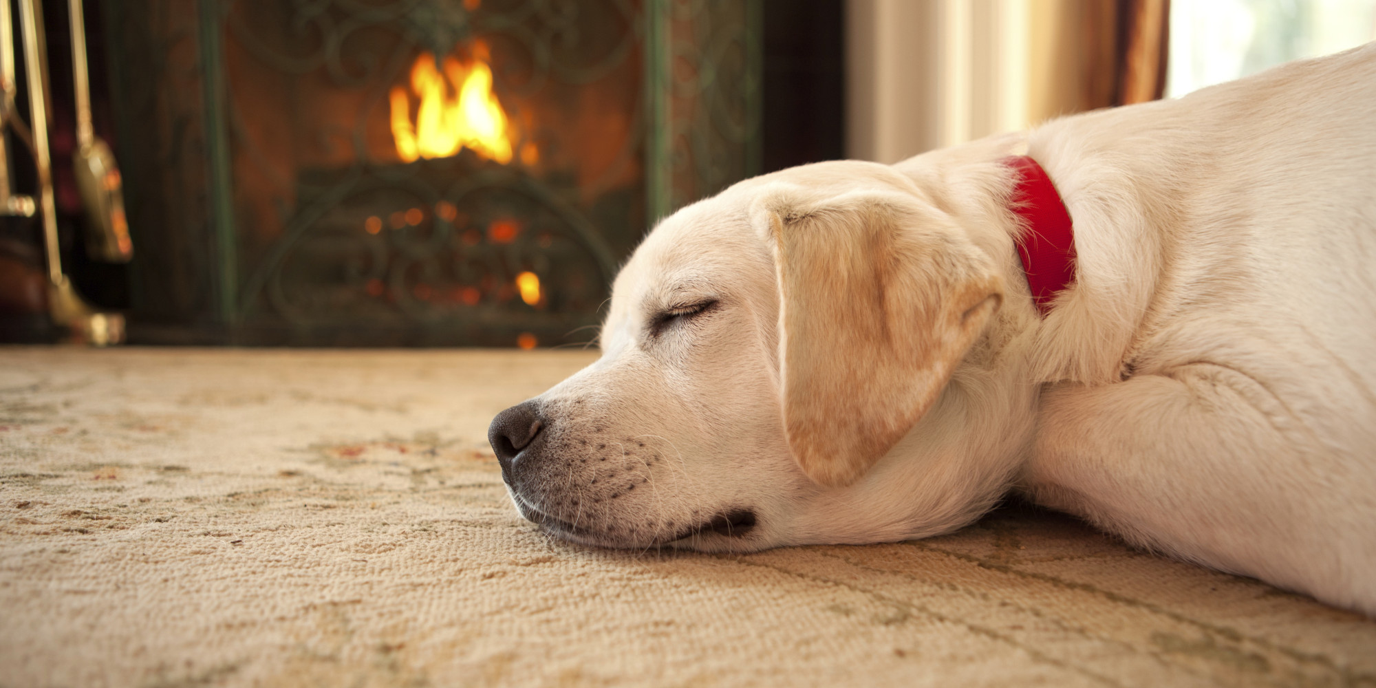 chilled-out-dogs-winter-wellness-2.jpg