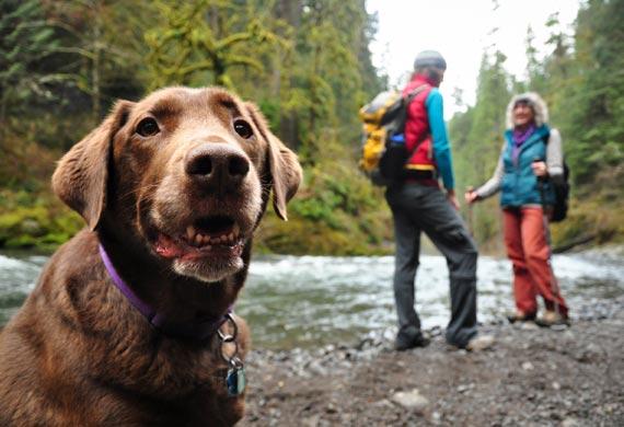 dog-hiking-iStock_000015552582Small.jpg