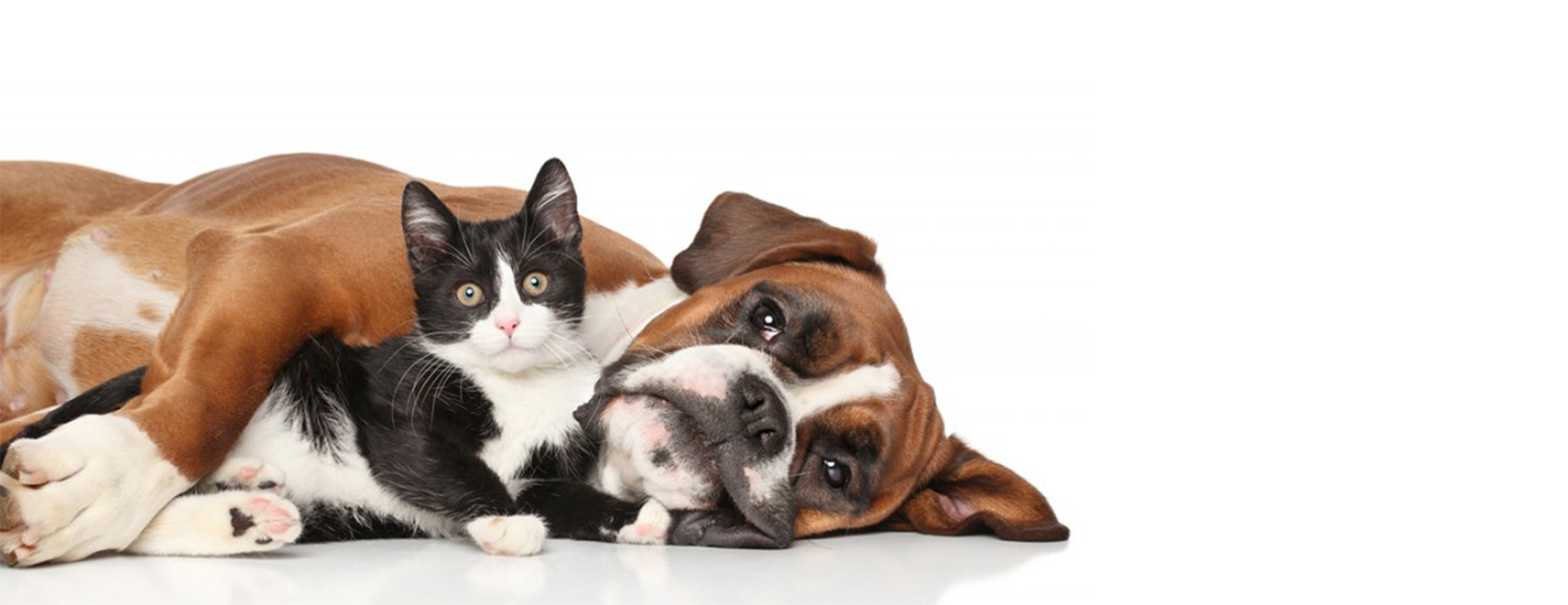dog & cat banner.png