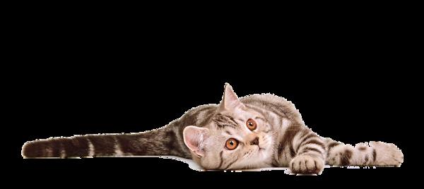 png_cat_by_eross_666-d5457c8.png