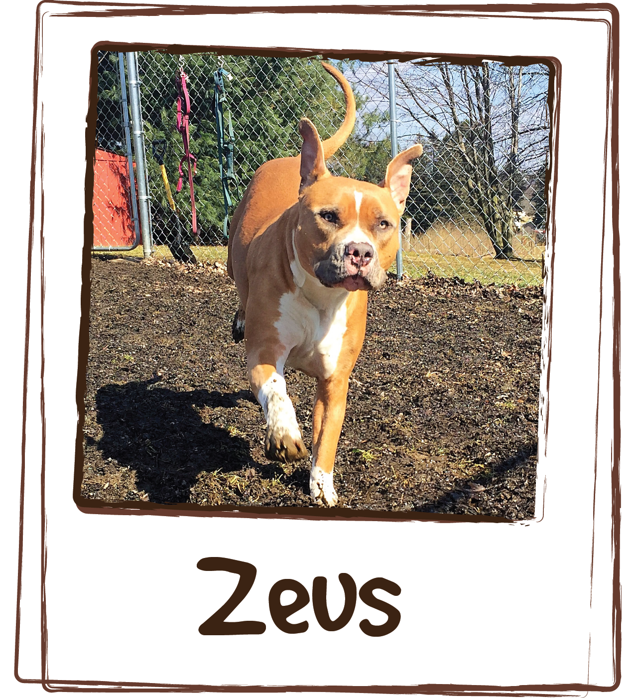 """I am so happy that your products exists! Zeus partially tore his ccl and his leg has bothered him ever since. He's had a hard time getting up after naps and running for long periods of time. The vet gave him glucosamine supplements but he refused to eat them. I tried another joint supplement and he didn't like that one either. So I got him the Licks Joint and Heart liquid packets and he absolutely loves them! And he's been taking them for almost a year now and his leg is as good as new!! It appears to not bother him at all anymore. Thank you so much!"""