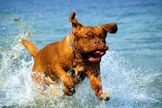 summer-dog-boarding-in-Houston-splash.jpg