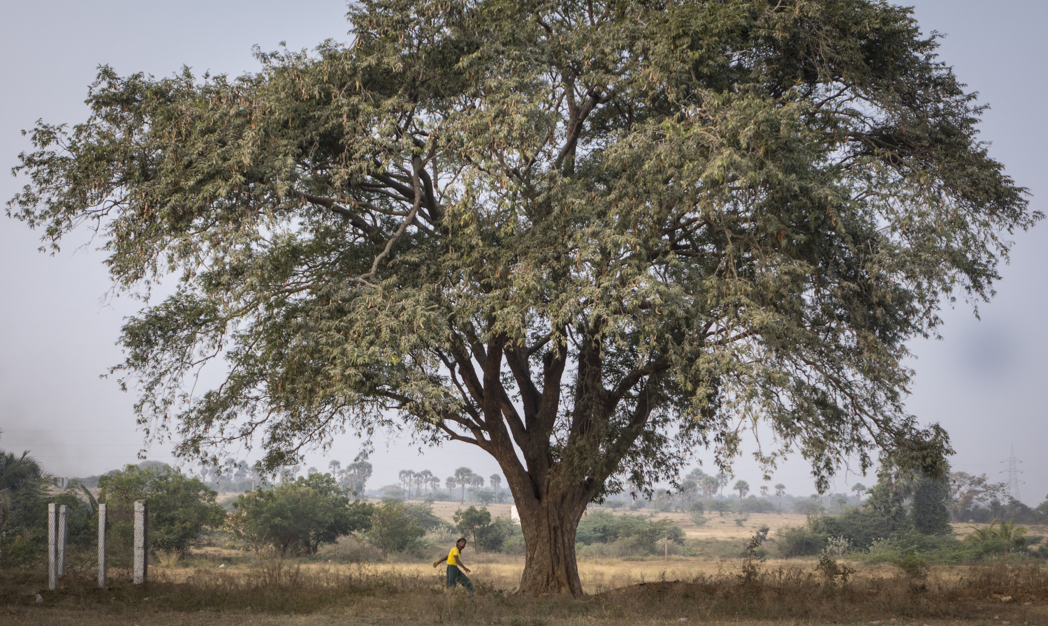 Moses, a boy in standard six at GPS, throws stones at a 130-year-old fruit tree. The stones will knock down the tamarind, a fruit that blossoms only two or three times a year. His mother will use the tamarind to cook in the curry for his family's lunch.  Akash Praveen. G
