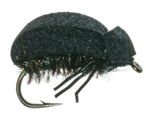 C)Beetle  Foam Beetle
