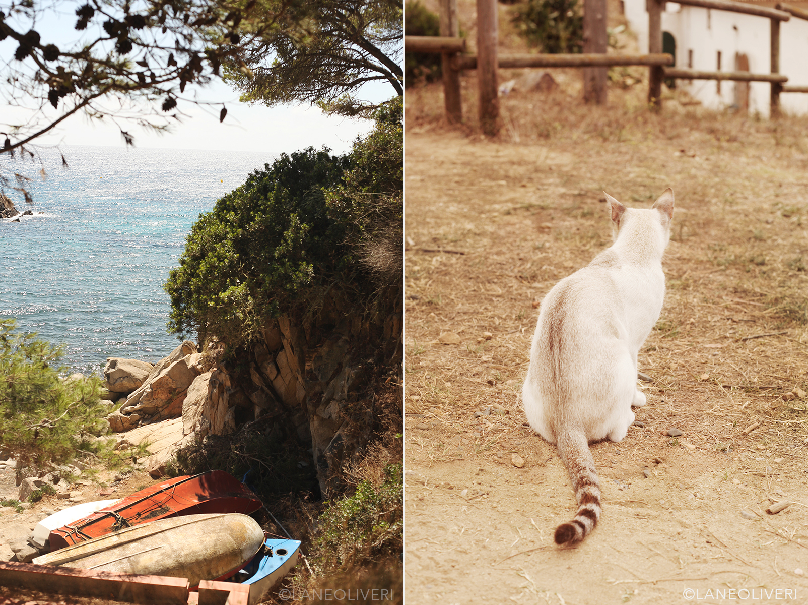 El Gato solo, tail twitching just below the ruins and above the beach. Lane Oliveri 2017
