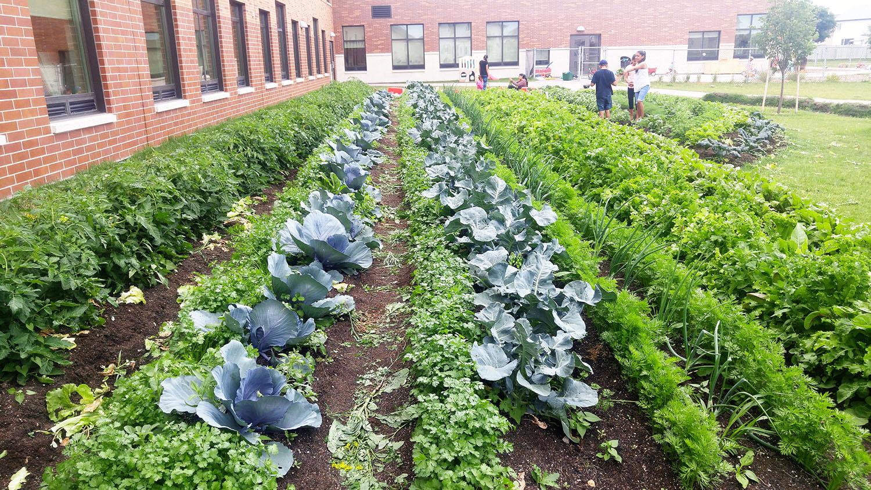 Farming at Amber Trails Community School