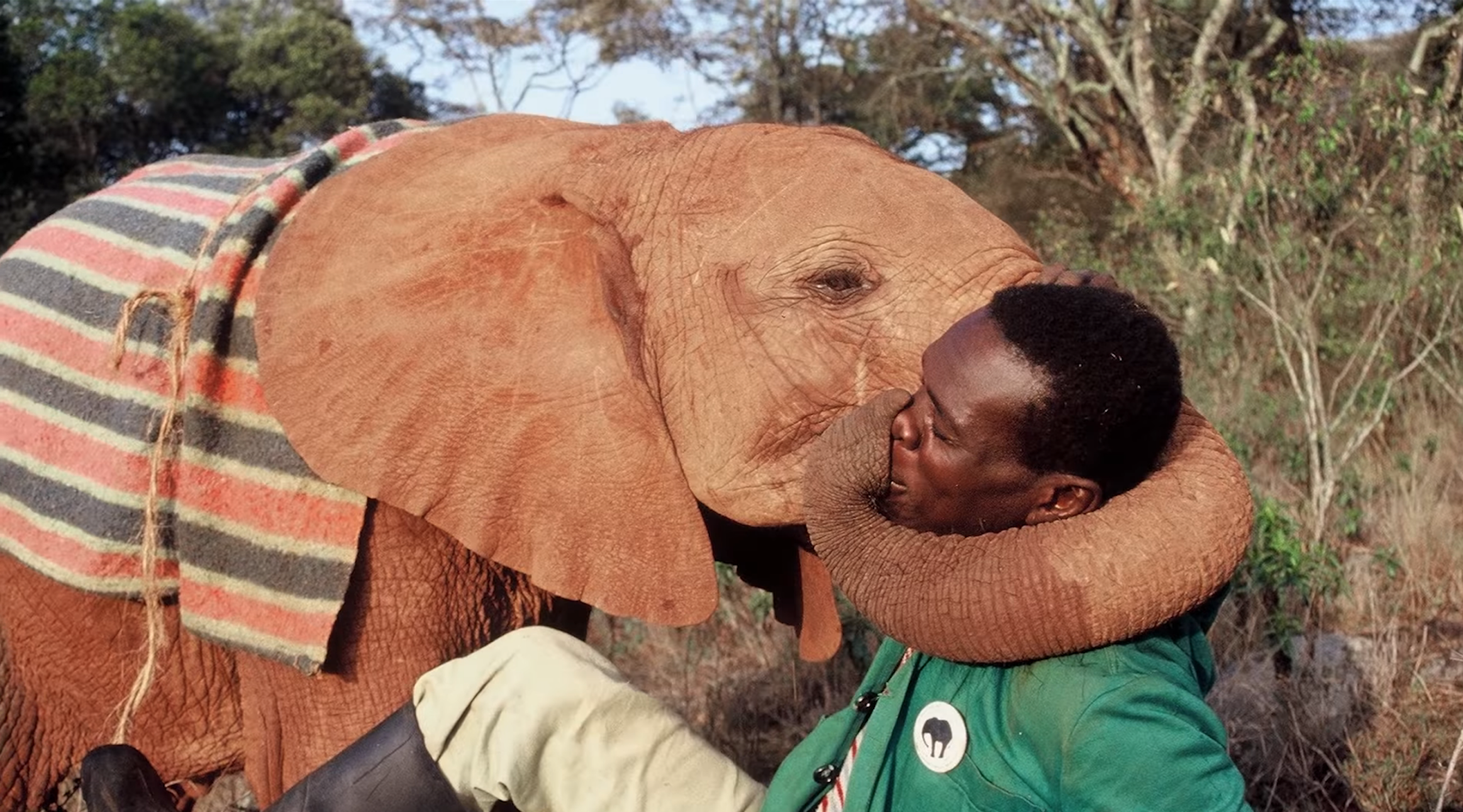 THE SHELDRICK TRUST