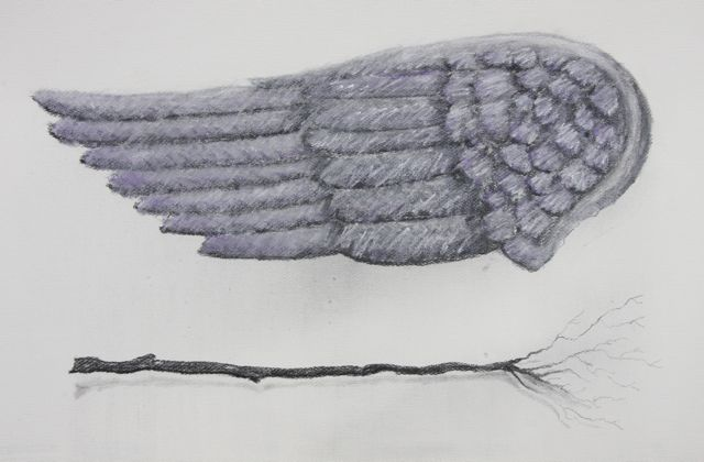 Wing and branch   2011  22 x 30  Framed Charcoal and chalk pastel on paper