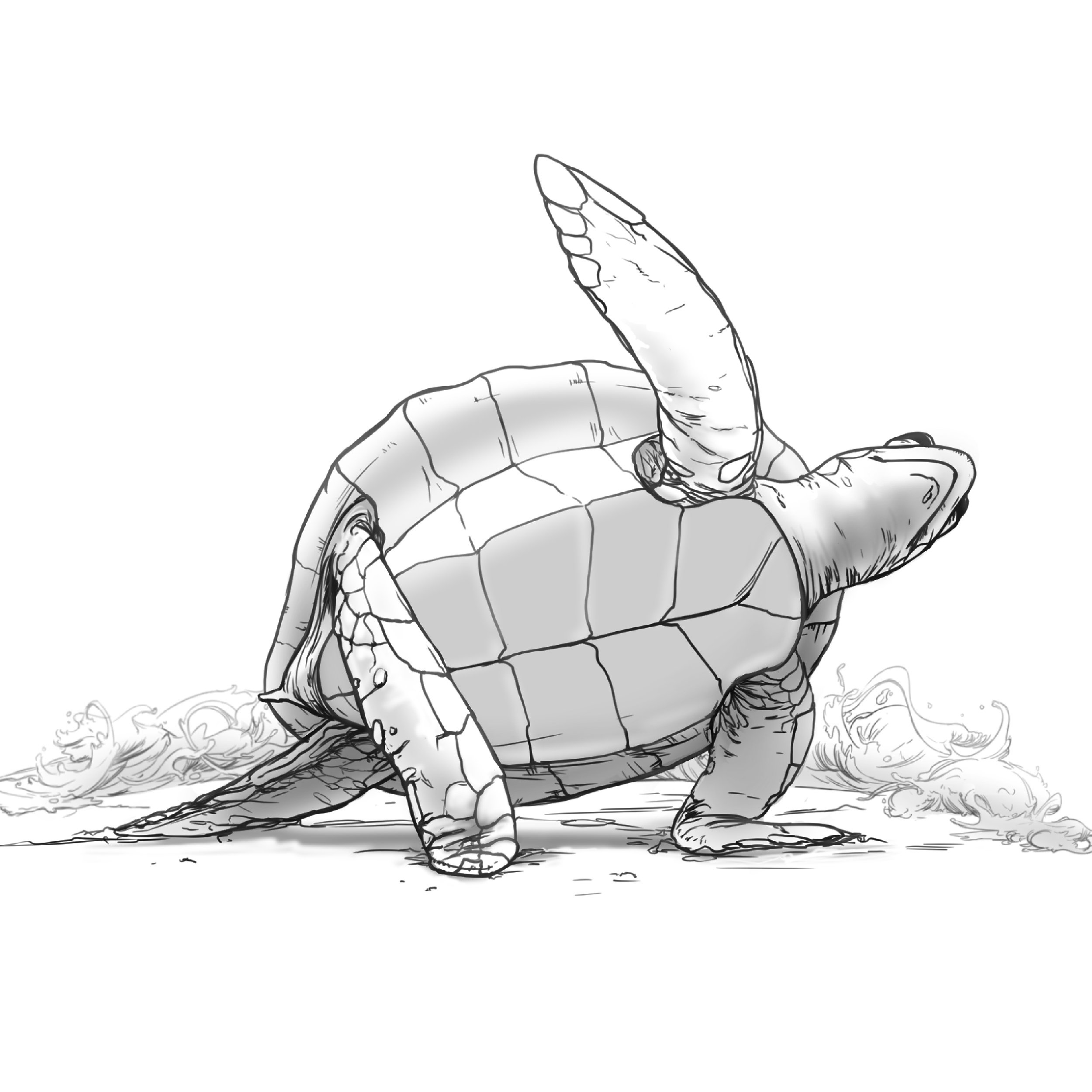 Yoga Turtle
