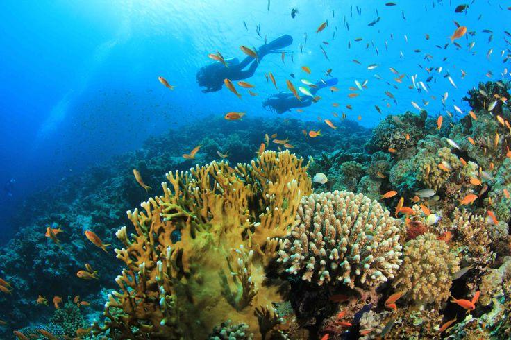 734e01e0474ec14bd43f70baf3b4f7ef--coral-reef-ecosystem-coral-reefs.jpg