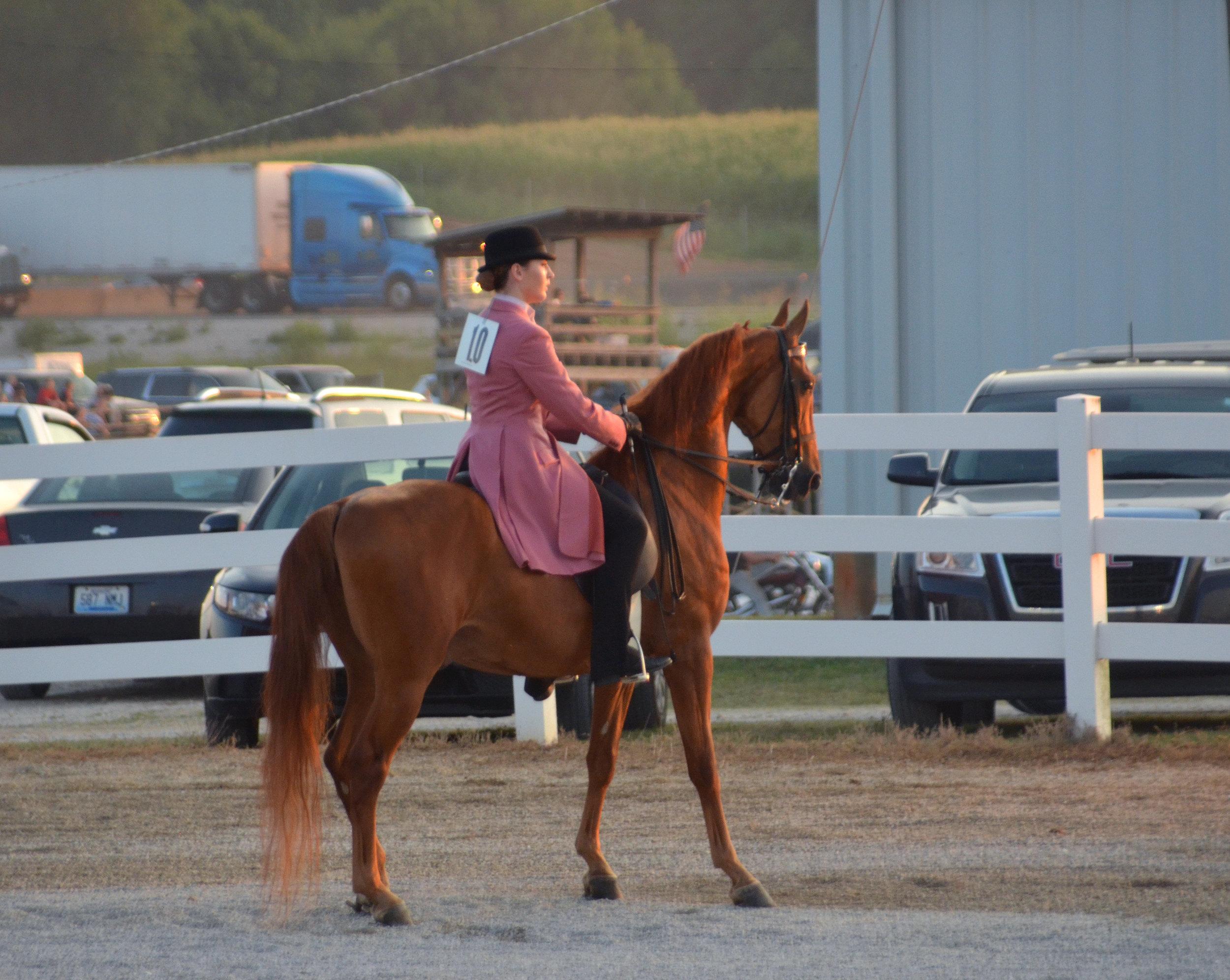 Horse Shows 6335.jpg