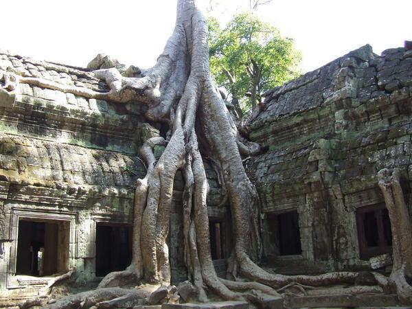 812275-Tree-overgrown-temple-Ta-Prohm-0.jpg
