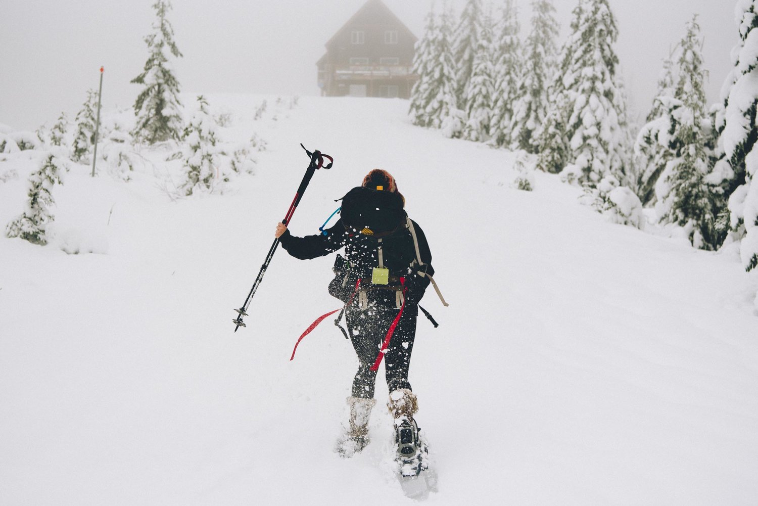 Mount Tahoma Trails: An Idyllic Winter Retreat